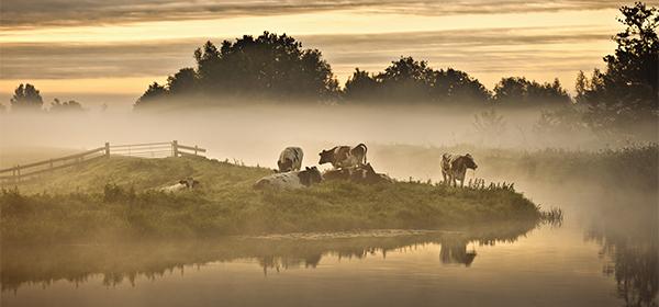 Ontdek de Nederlandse natuur